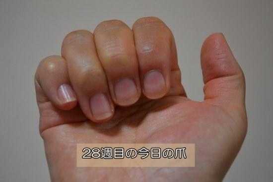 28週目の爪